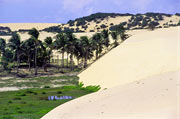 The dunes and vegetation of the Cumbe